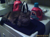 10-18-2006: Molly on the dryer