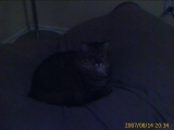 08-14-2007: Fat cat in the dog bed