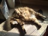10-30-2011: Fat lazy cat!