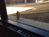 12-30-2011: My new buddy!