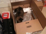 2-25-2011: Cats love boxes