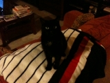 3-21-2011: Mean little cat