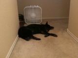 4-10-2011: Abby loves her fan