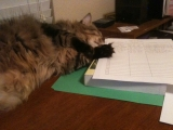 6-24-2011: Helping me grade papers