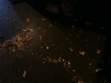 6-3-2011: Peanuts on the floor!