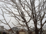 12-21-2013: Our tree is frozen!