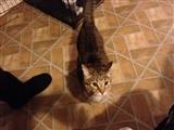 1-6-2013: Here is Oli!