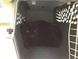 2-2-2013: Its my cat in a box