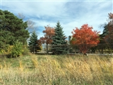 10-16-2014: Fall colors