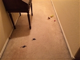 11-7-2014: Cat toys everywhere