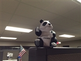 12-19-2014: Yay Panda!