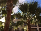 1-21-2014: Palm trees!