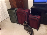 2-16-2014: Suitcases are out, ready to go.