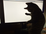 2-1-2014: Dolly is amazed by the mouse pointer