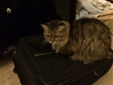 3-16-2014: Protecting my suitcase