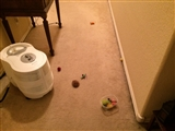4-18-2014: Too many cat toys