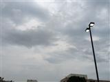 7-23-2014: Rain already!