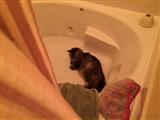 8-27-2014: Cat tub