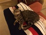 8-9-2014: Lazy cat