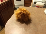 9-26-2014: Look out, I have a tribble!